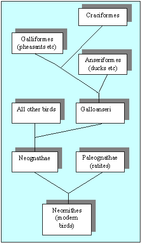 Relationships between bird orders