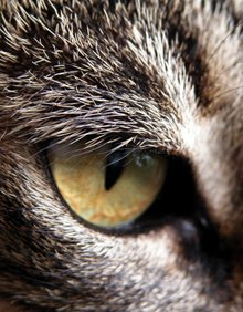 A close-up of a cat's eye.