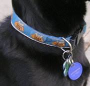 Nylon quick-release buckle collar with identification and medical tags.