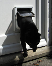 A cat flap in action.